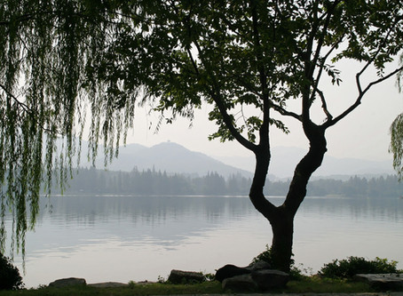 Ophelia's Tree