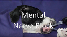 Mental nerve block