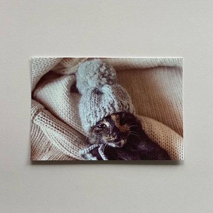 teteオリジナル ポストカード(ポンポン付ニット帽)