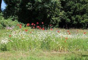 wildflower meadow.jpg