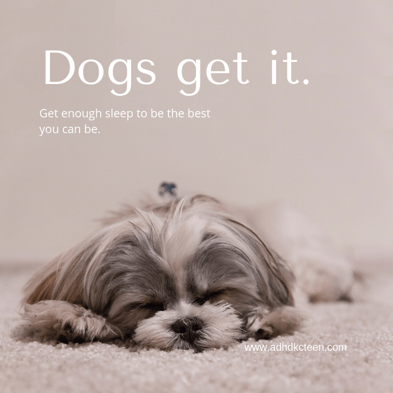 Dogs get it. Your brain needs sleep to process and store information. Get enough sleep to be the best you can be. #sleepmatters