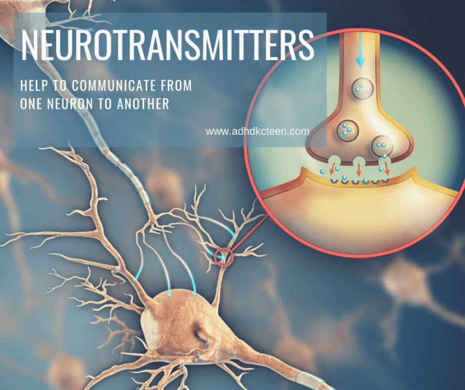 Neurotransmitters help to communicate from one neuron to another. For more see adhdkcteen.com. #adhd #whatisadhd #braindevelopment