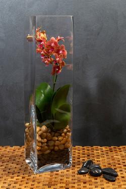 Diamond Plants