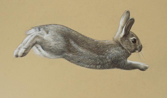 Run Rabbit