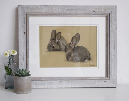 Grazing Rabbits