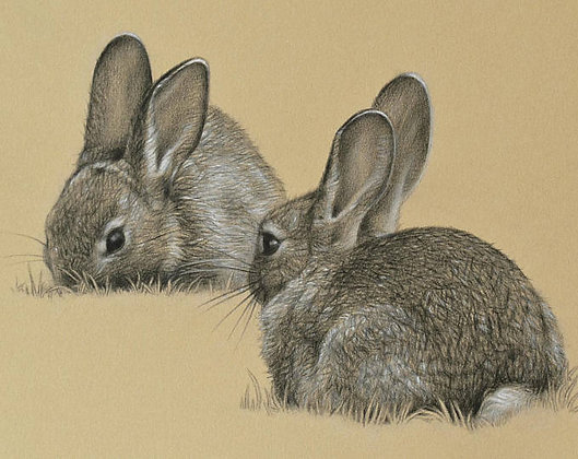 'Grazing Rabbits' Limited Edition Print