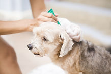 Tick and flea prevention for dogs