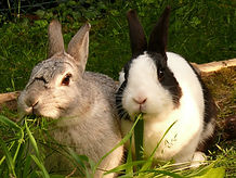 Nutrition for rabbits