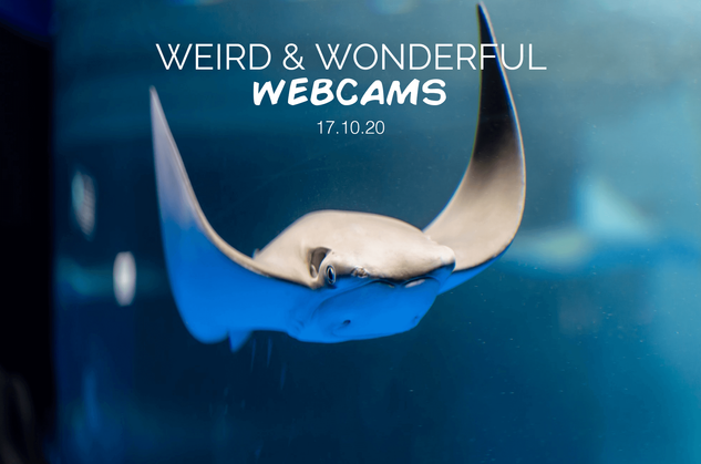 Weird & Wonderful Webcams