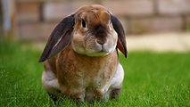 Introduction to rabbits