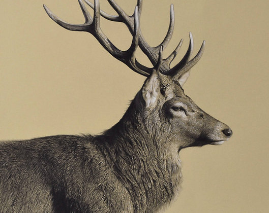 'Striding Stag' Limited Edition Print in 2 Sizes