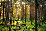 earth day forest scene reduced.jpg