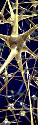 colonne_neurones.jpg