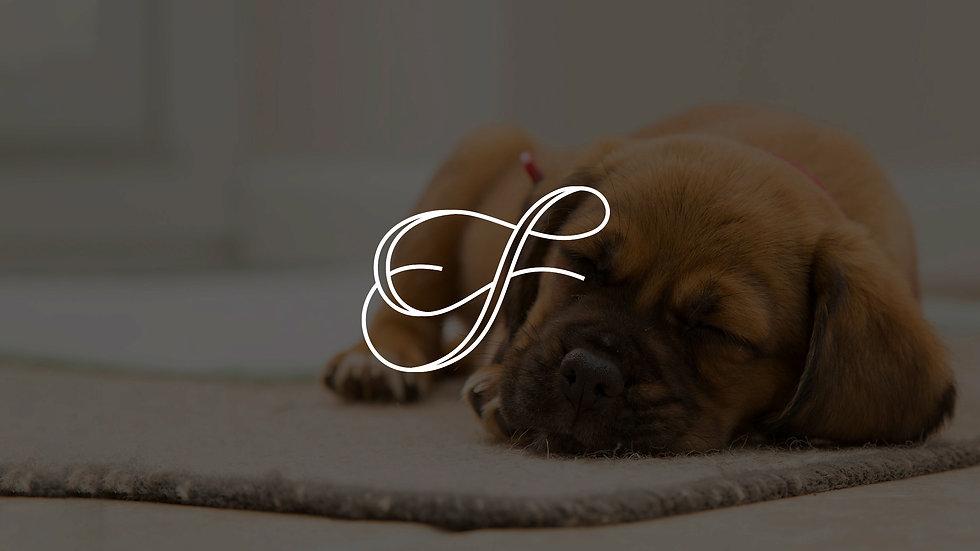 Fauna Pet Beds
