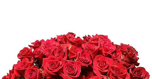 roses-2819157__340.jpg