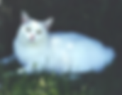 Veterinarian Newberg OregonDog, Cat, Pet, Animal, Feline, Canine, Puppy, Kitty, Kitten, Doggy, Camp, Cabin, Tent, Kennel, Board, Boarding, Inn, Hotel, Crate, Vet, Veterinarian, Doctor, Clinic, Hospital, Vaccination, Vaccine, parasite, test, Dr. Fischer, Or