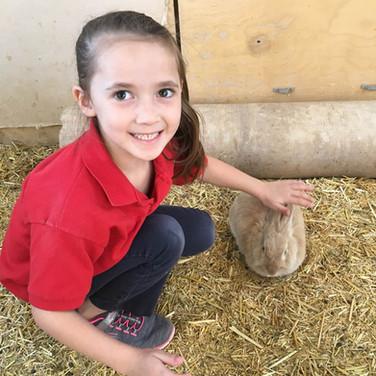 student-petting-rabbit-field-trip.jpg