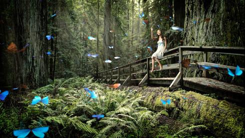 ButterflyAnimation.jpg