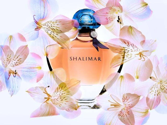 Shalomar+flowers_2.jpg