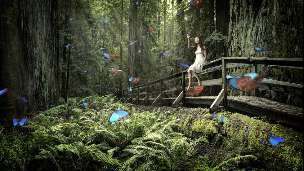 Chris Criman - Butterflies