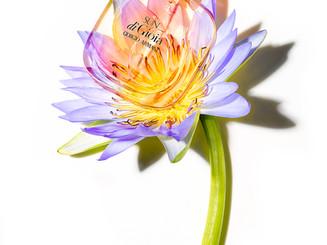 water+lilly+Sun+di+Gioia.jpg