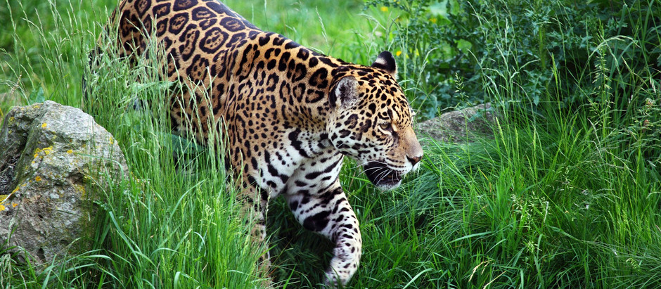 Os Efeitos da fragmentação de hábitat sobre a Biodiversidade.