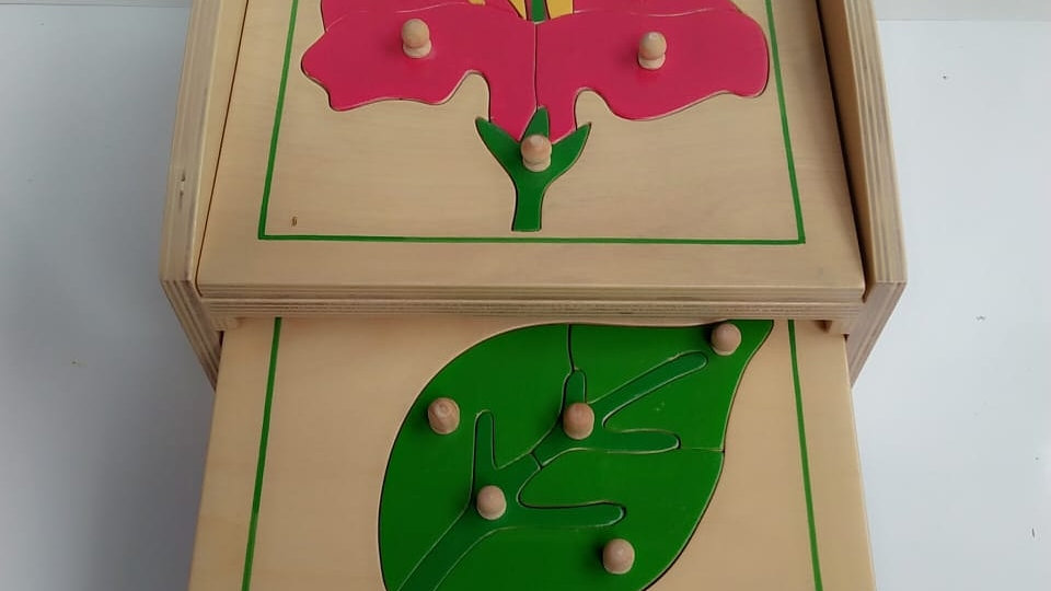 Botany Puzzle and Cabinet