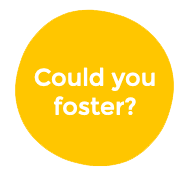 could you foster_.png