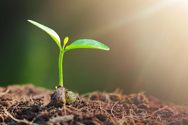 Spenden Wachstum Aufbau Afrika