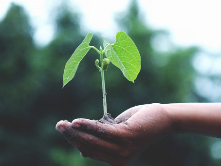 Empresários discutem sobre a tendência sustentável no pós-covid