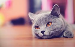 cute_cat_wallpaper_hd_by_alexandruiuilian-d5aslq1
