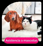 asistencia-mascotas.png