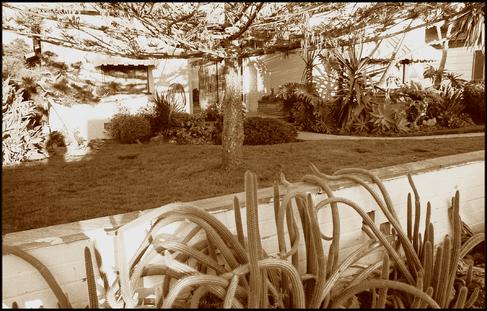 Startling Succulents