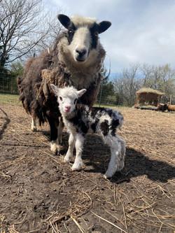 Domino Lamb and Momma