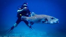Курс Digital Underwater Photographer