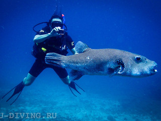 Курс Digital Underwater Photographer