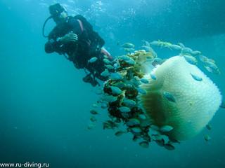 Про медузу на Пхукете