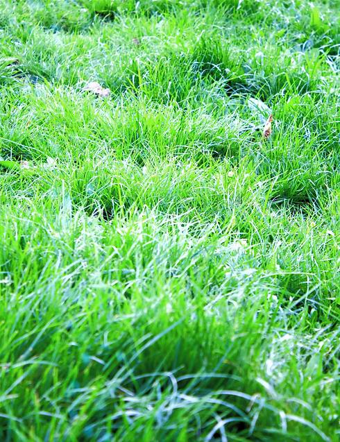 Grass%25252520copy_edited_edited_edited_edited.png
