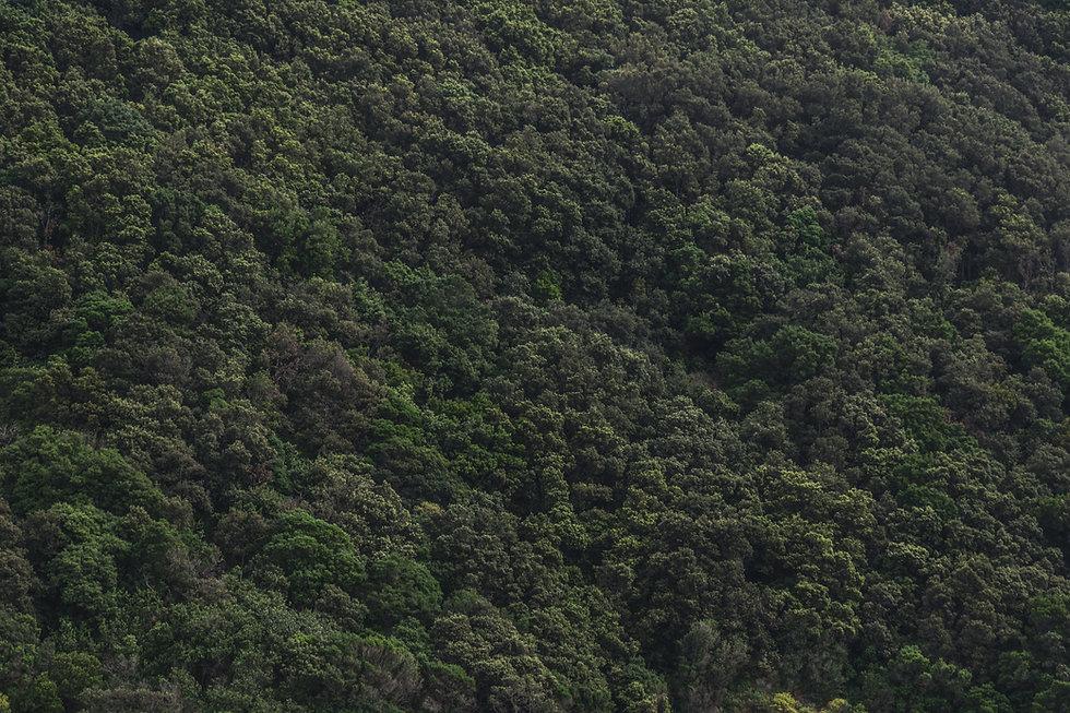 mountain-trees-green-texture.jpg
