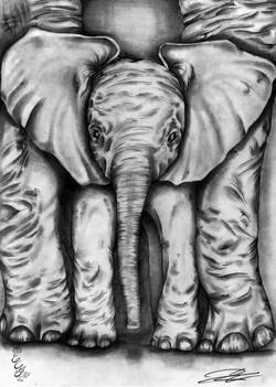 Baby _ mother elephant - 2011 - web