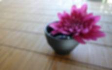 chrysanthemum-757439_edited.jpg