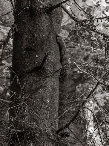 A wildcat climbing a trunk at Adliswil Wildnispark in Zurich, Switzerland by Robin Cox.