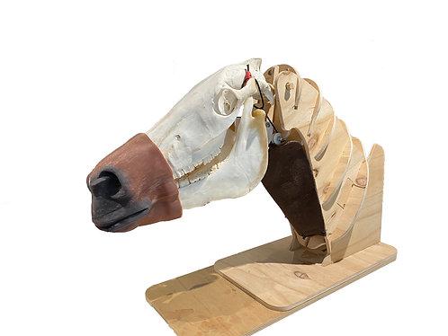 Nasogastric Horse Intubation Model