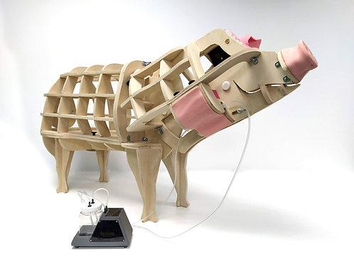 Pig Jugular Blood Taking