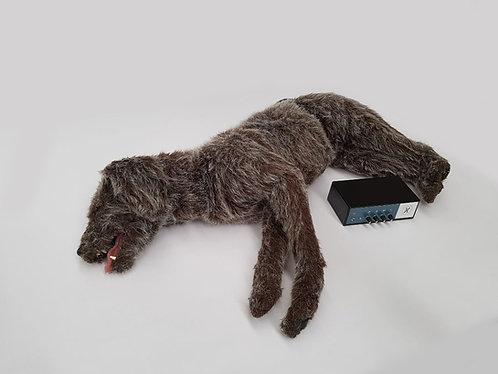 Canine Cardio Audio Box