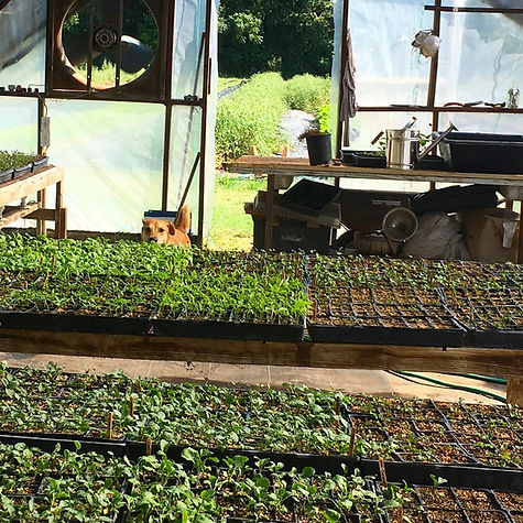 17 greenhouse.jpg