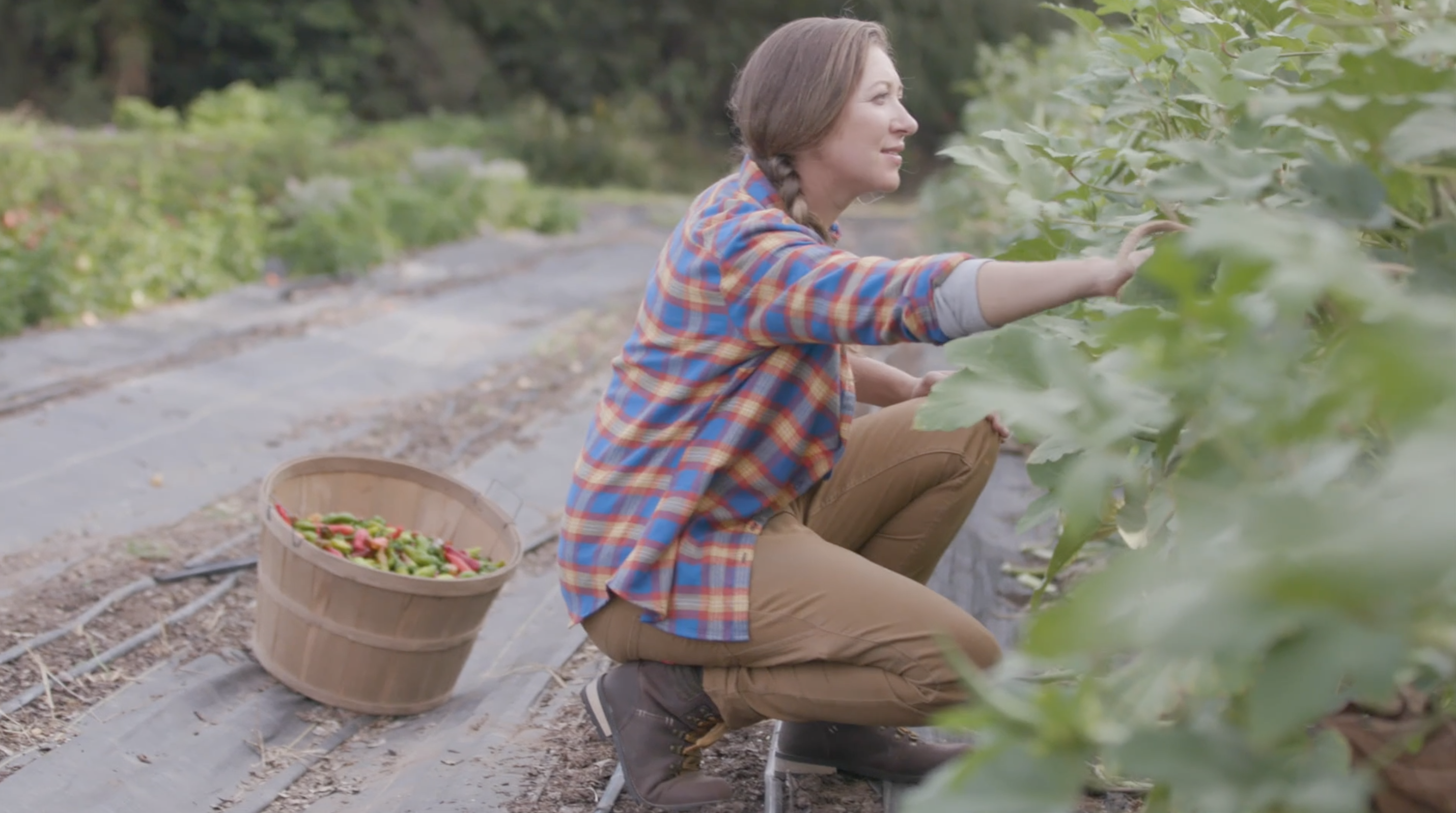 Monica-Farmer, Field Manager