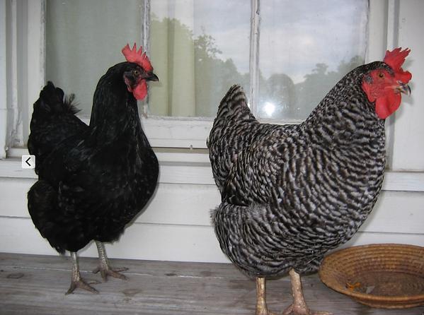 16 2007 Penny & Tootie Porch Girls Favor