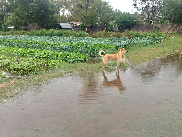 4 Floods.jpg