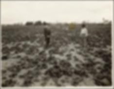 Spinach History in Austin Farm.jpeg